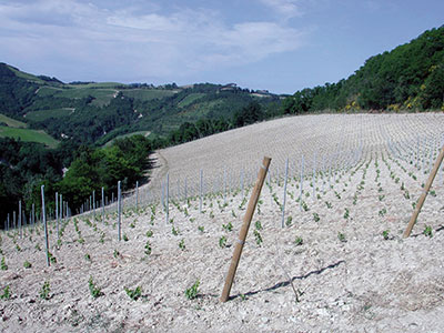 Allineamenti perfetti in vigneto vvq vigne vini for Piantapali manuale