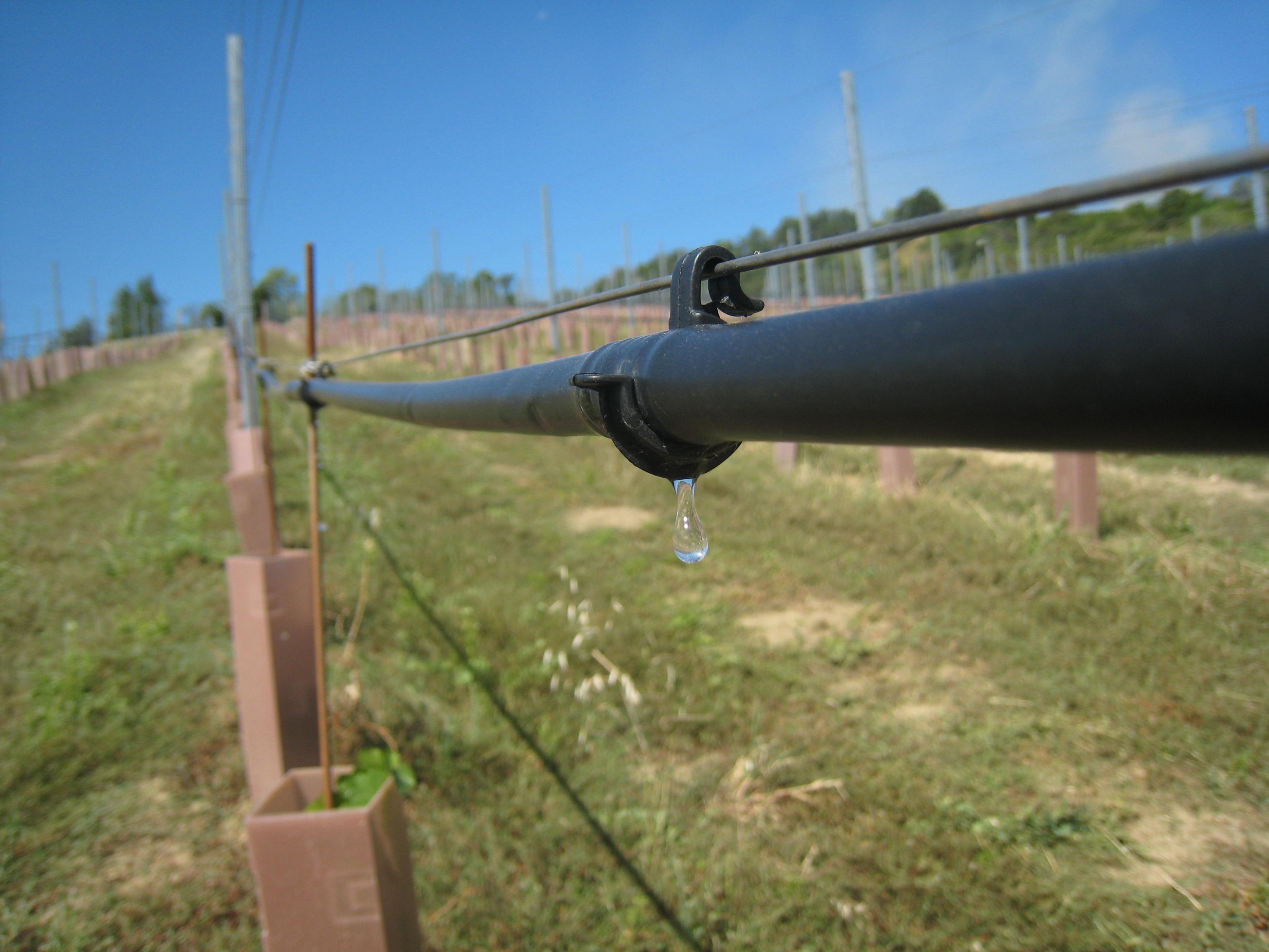 Irrigare utile o indispensabile vvq vigne vini for Irrigazione vigneto