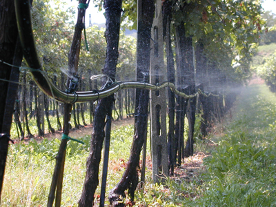 Irrigazione a soave i viticoltori si organizzano vvq for Irrigazione vigneto