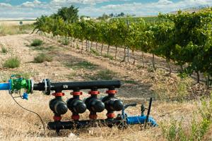 La regione veneto vara la rete per l 39 innovazione for Irrigazione vigneto