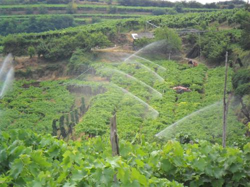 L 39 uso razionale dell 39 acqua in vigneto vvq vigne vini for Irrigazione vigneto