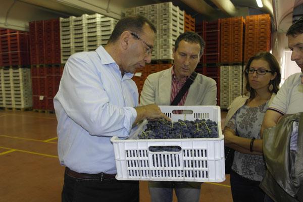 Come spiega l'enologo Daniele Accordini, Solo i grappoli migliori di Corvina, Corvinone e Rondinella, oltre ad altre varietà minori, vengono selezionati per l'appassimento al termine del quale si otterrà il mosto per la produzione di Amarone e Recioto.