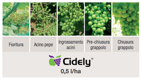 Cidely applicazione