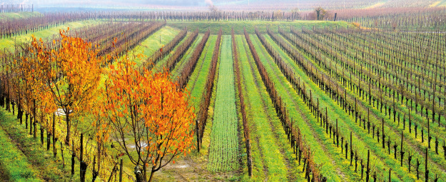 Gli autoctoni del Friuli-Venezia Giulia tra clima e mercato