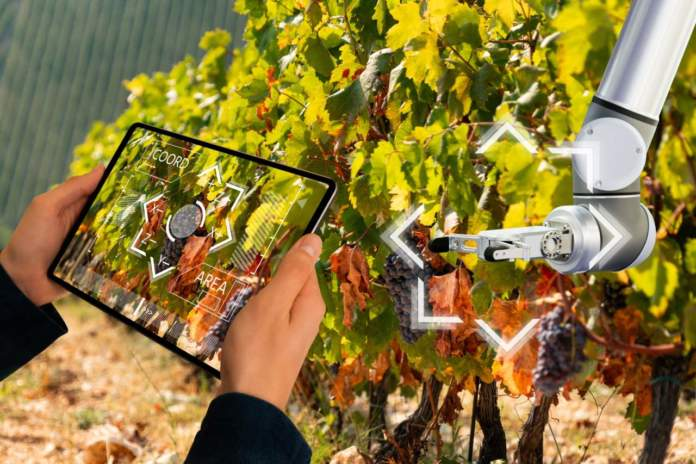 Vendemmia digitale
