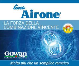 linea antiperonosporica airone