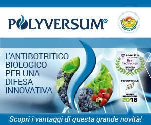 biofungicida polyversum