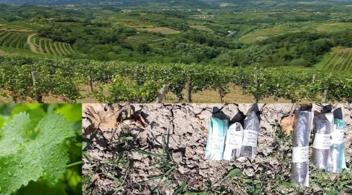 """""""Ciclo idrologico in viticoltura"""", webinar del Progetto Acquavitis"""